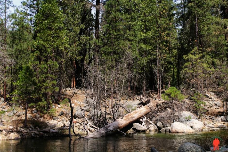 Arbre mort au Parc Yosemite