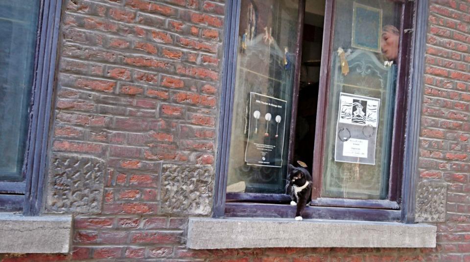 Chat Mons belgique