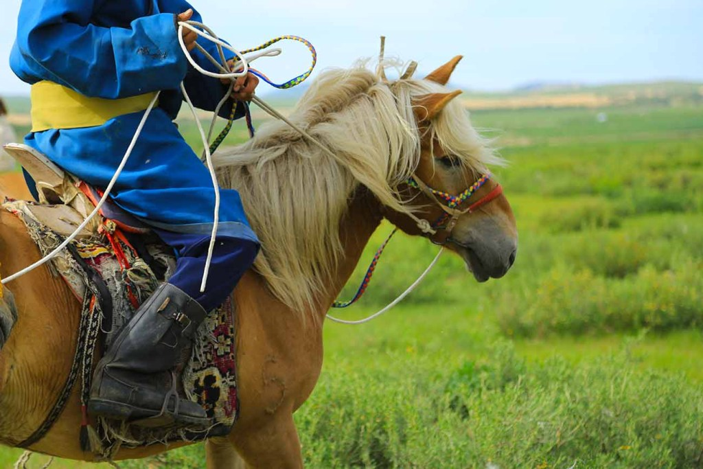 mongolie-cheval