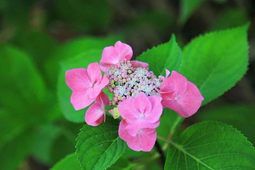 bois-fleuri