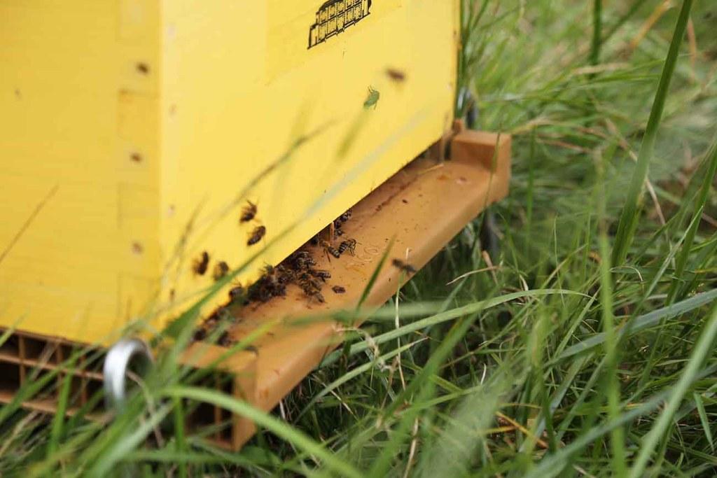 miel-chateau-dauzac-abeilles