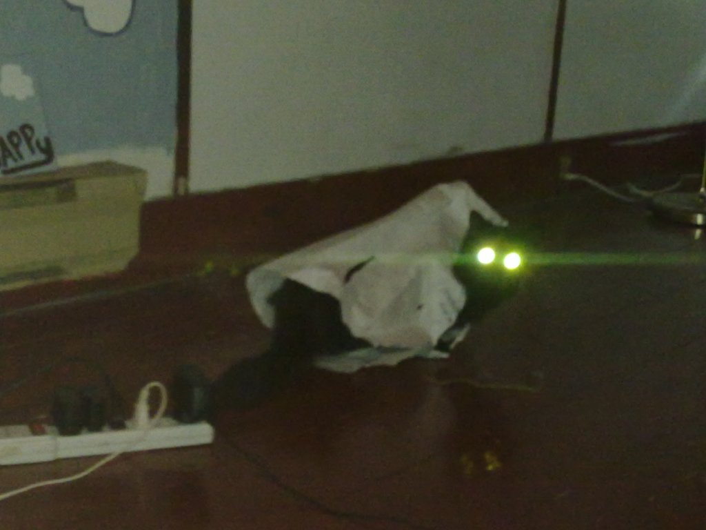 """Feline Flashlight"" Taken October 20, 2010 with Nokia N97 Smartphone"