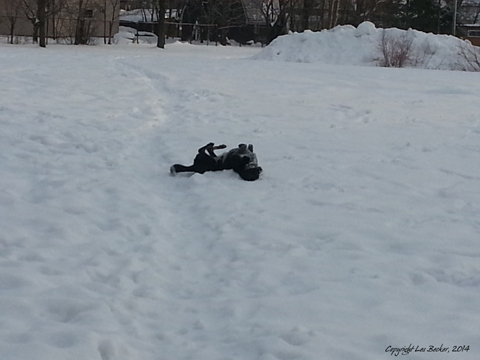 Kaylee loves to make snow angels...