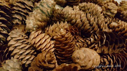 Spruce Cones