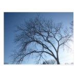 "creepy-tree-zazzle (""Creepy Tree"" Postcard at Zazzle…)"
