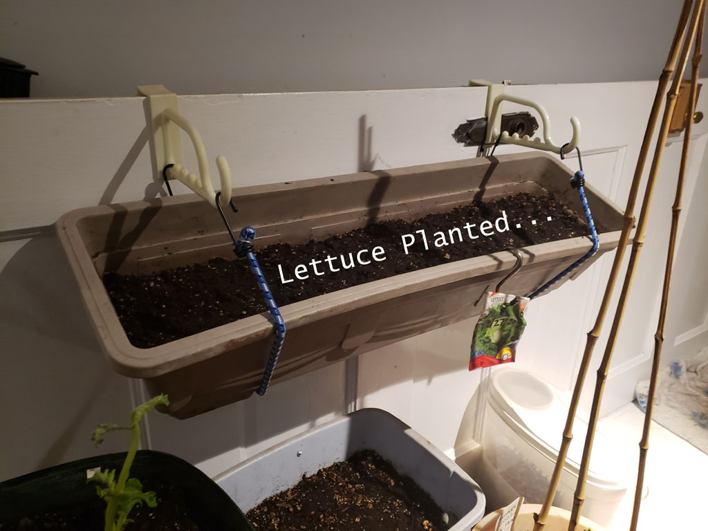 Lettuce seeds planted in soil in a long window box container that is hanging from the wall.