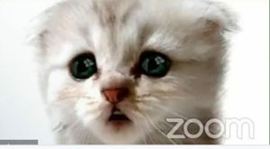 Close up of kitten's face in Zoom virtual meeting window