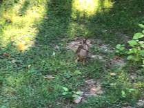 Bad Rabbit 2
