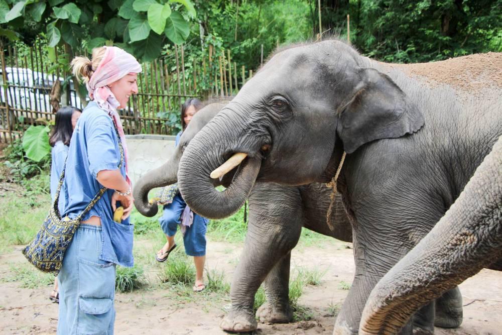 Chiang mai maerim elephant sanctuary par les bons plans de stef