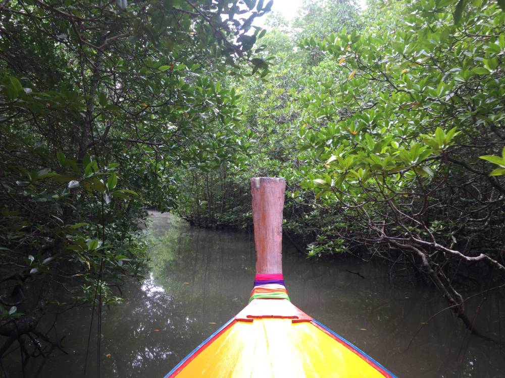 les mangroves par les bons plans de stef