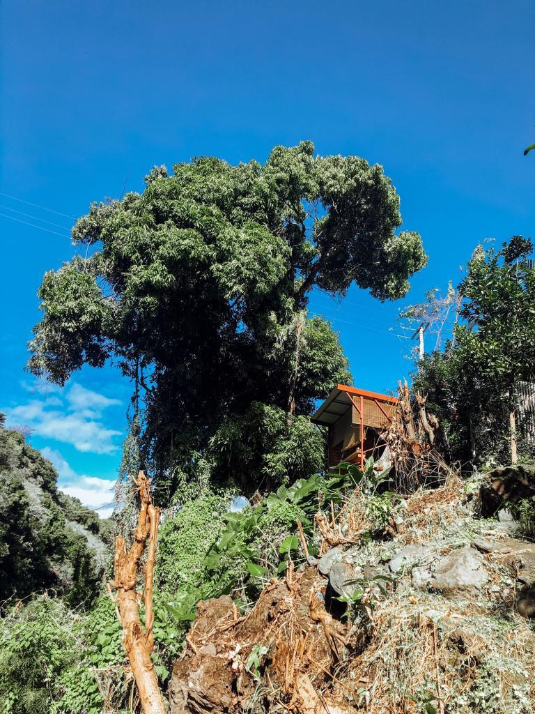 The Bird House Saint-Joseph La Réunion Cabane