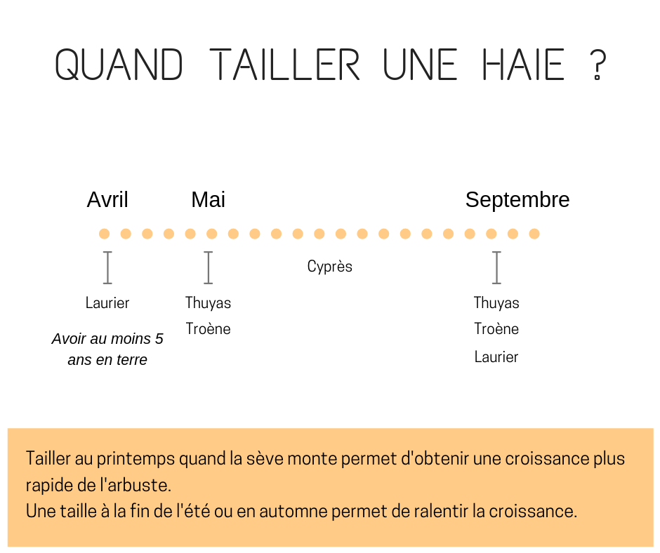 quand tailler une haie