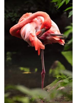 14. Toilette d'un flamant rose perché sur une patte au bord d'une rivière. Idéal pour la décoration d'un salon ou d'une chambre, pour un intérieur zen et nature.