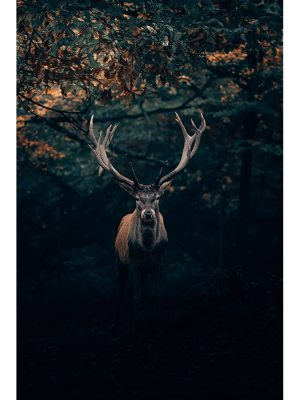 21. Photographie d'un majestueux cerf, roi de la forêt, au crépuscule dans la foret de Teutberg en Allemagne. Idéal pour la décoration d'un salon ou d'une chambre, pour un intérieur zen et nature.