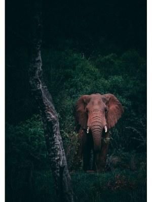 Un imposant éléphant s'est arrêté seul auprès d'un arbre au milieu d'une forêt de feuillus très verts à la lumière de fin de journée. Idéal pour la décoration d'un salon ou d'une chambre, pour un intérieur zen et nature.