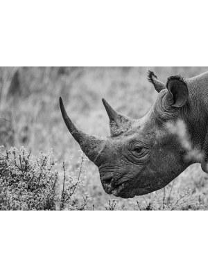 9. Portrait magnifique en noir et blanc d'un rhinocéros se régalant de broussailles épineuses. Idéal pour la décoration d'un salon ou d'une chambre, pour un intérieur zen et nature.
