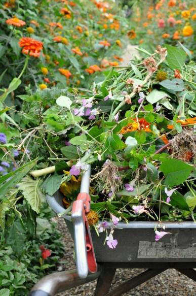 La brouette du jardinier dans les jardins de Monet à Giverny