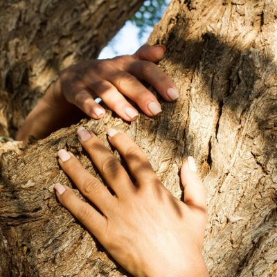 treedom arbre