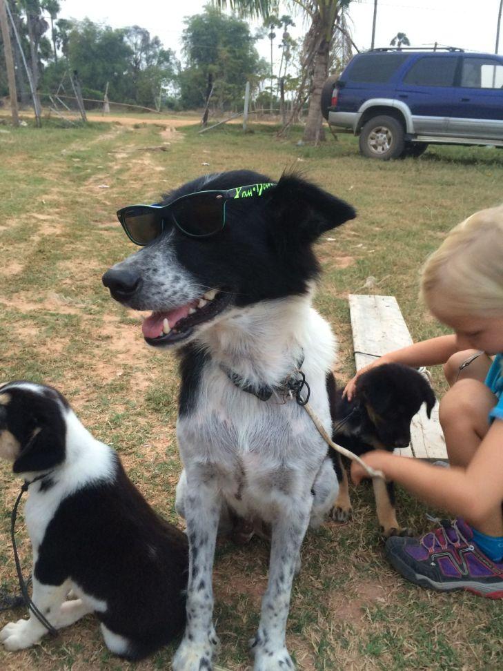 Les enfants s'amusent bien avec les chiens