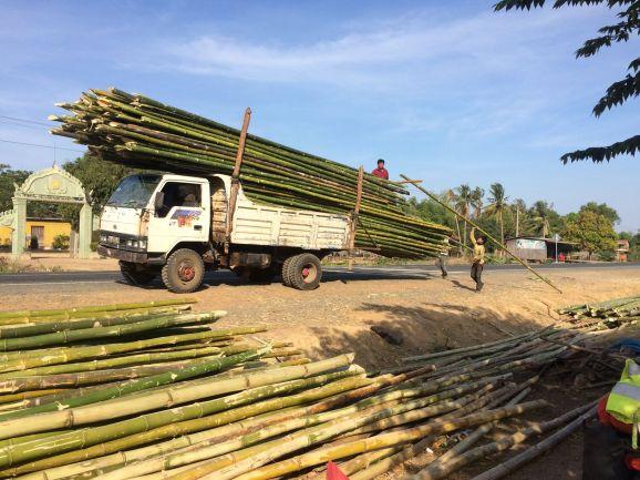 Grosse production de bambou au Cambodge