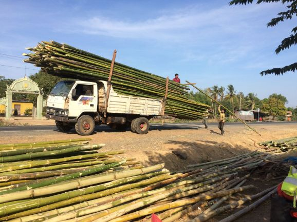 Grosse production de bambou au Cambodge