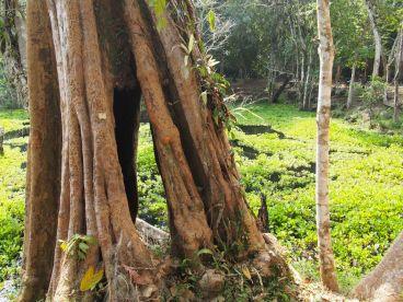 Ambiance de jungle