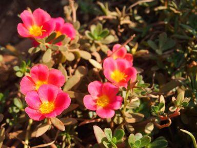 C'est zoli les fleurs !