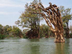 La végétation s'adapte au fleuve (ou pas)