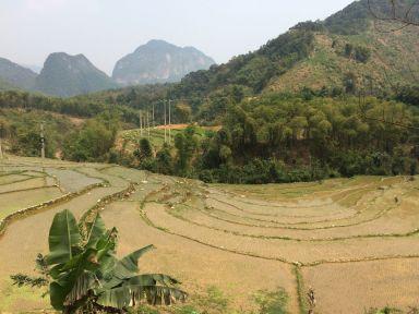 Ici les rizières sont en eau
