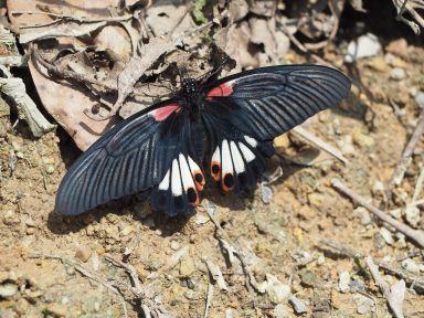 Des jolis papillons