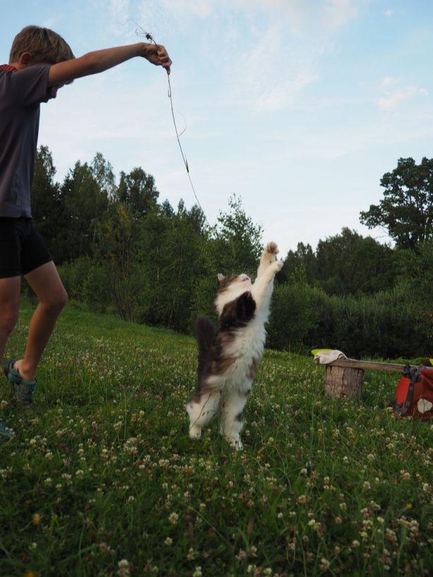 Le jeu du chat sauteur!