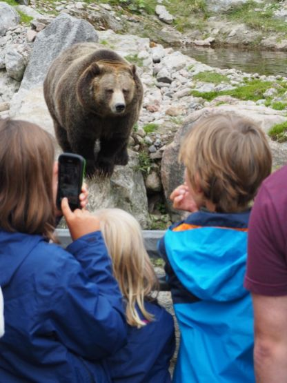 Visite du zoo de St Félicien - un must (même pour ceux qui n'aiment pas trop le concept des zoos...)
