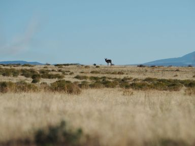 Dans le désert on voit facilement les animaux.