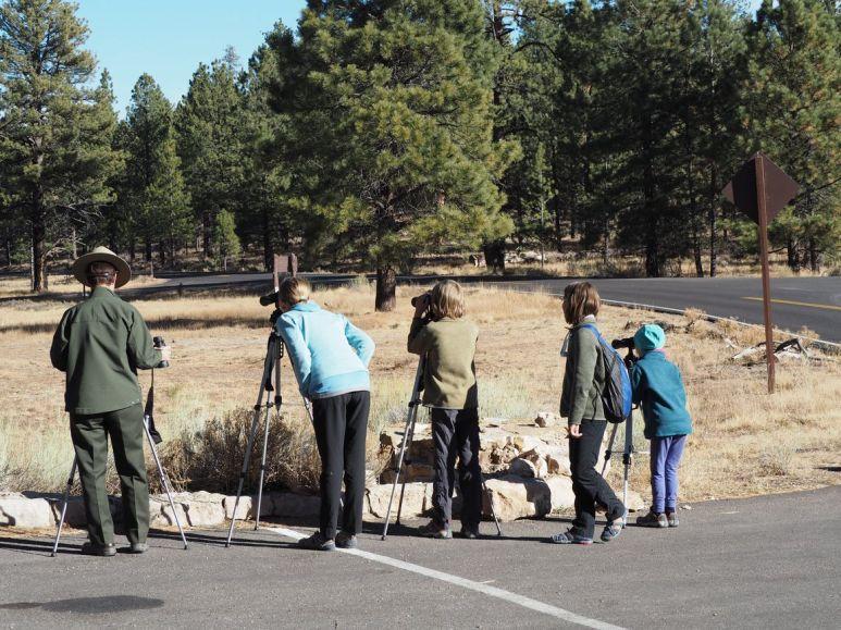 Activité observation des chiens de prairie