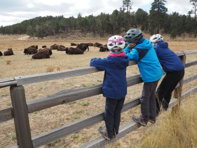 Impressionnants les bisons
