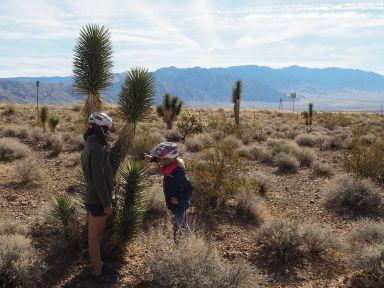 Retour au désert, nous sommes impressionnés par les grands aloés