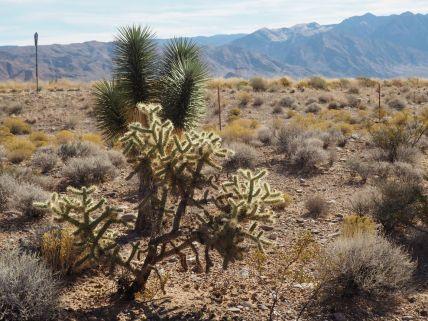 Le désert c'est plutôt ça