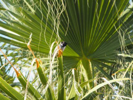 un colibri au réveil