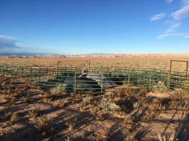 Quand y a trop d'épineux, on s'installe dans l'enclos à bovins !