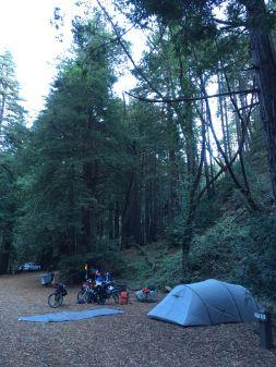 Camping tranquille sous les séquoias