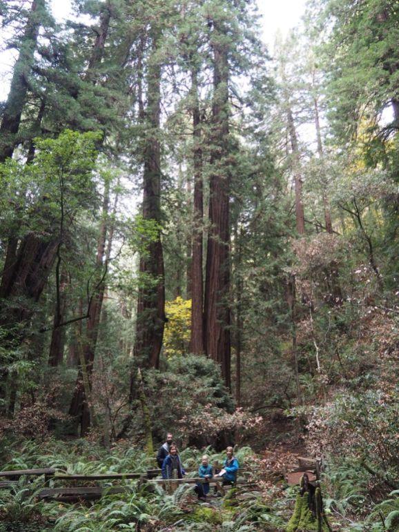 Au pied des redwoods