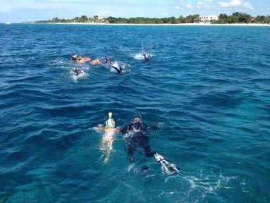 Snorkeling familial pour voir raies et tortue