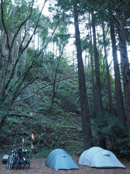 camping sous les séquoias