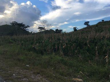 le Maïs est cultivé même sur des parcelles très pentues (pas de mécanisation ici...)