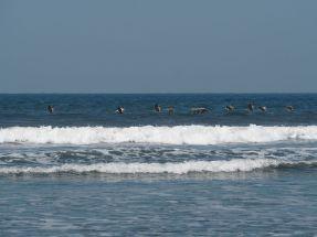 ils surfent avec les vagues