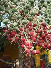 des fruits en quantités
