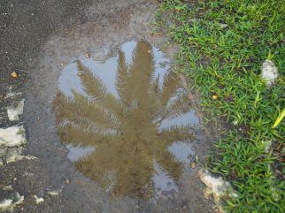 L'eau est l'amie des palmiers huiles