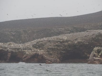 des oiseaux par centaines de milliers