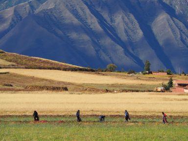 Dans les champs, les travaux sont encore quasi exclusivement manuels