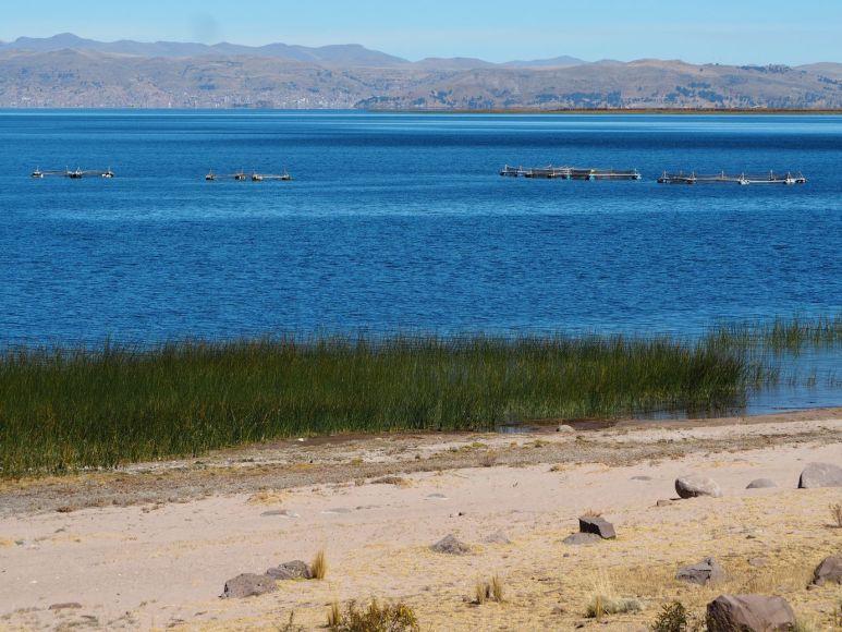 sur le lac un peu d'élevage de truites en cages artisanales